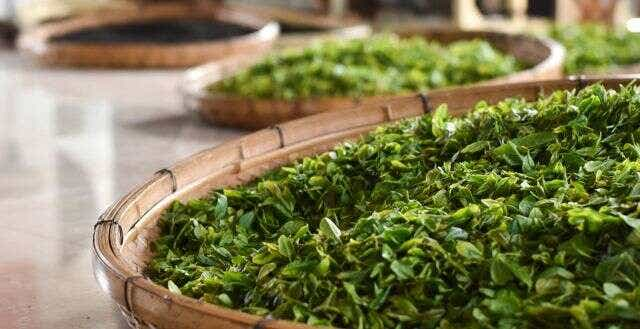 An Introduction to Seasonal Green Tea