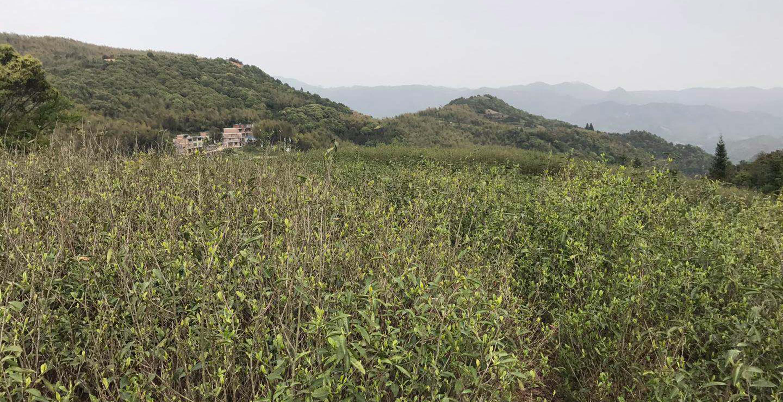 Field Guide, part five: Wuyangcun, Fujian
