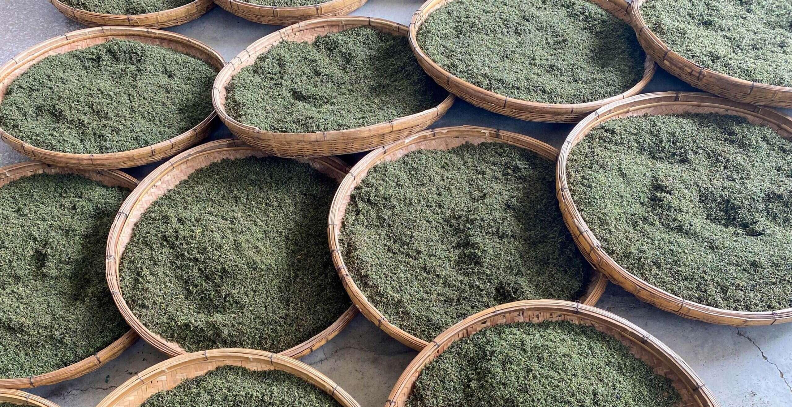 In the Workshop: 2020 Laoshan Spring Tea