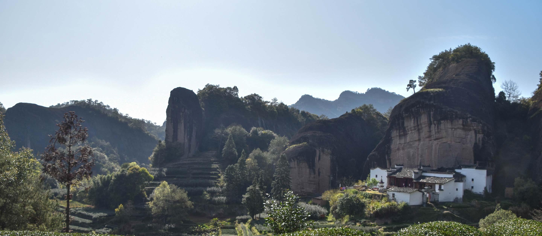 Rou Gui in Wuyishan