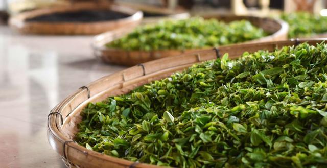 An Introduction to Seasonal Green Tea