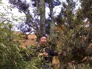 Master Han climbing a tree