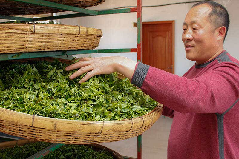 Mr He Laoshan Fresh Leaves-7863