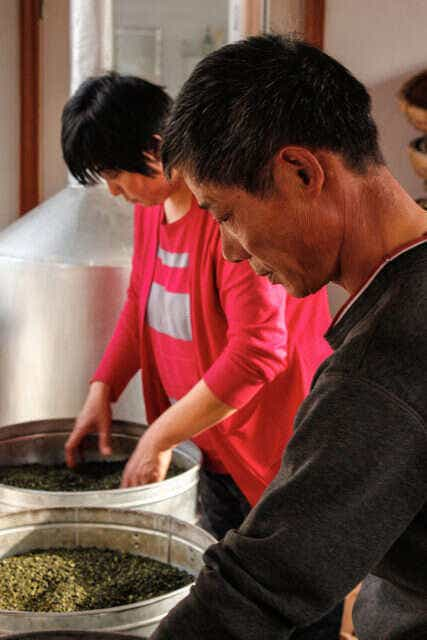 He Qingqing's mother and uncle work on Laoshan Green Oolong