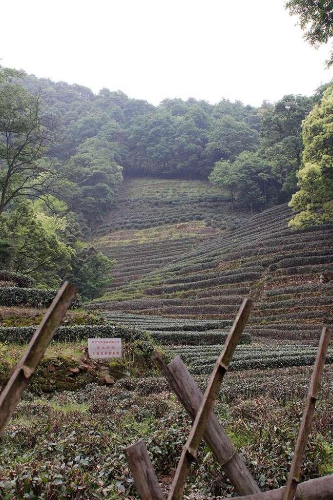 Private Tea Company purchases a small hillside