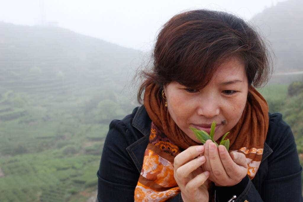 Wang Huimin, amazed by beautiful Tieguanyin tea leaves