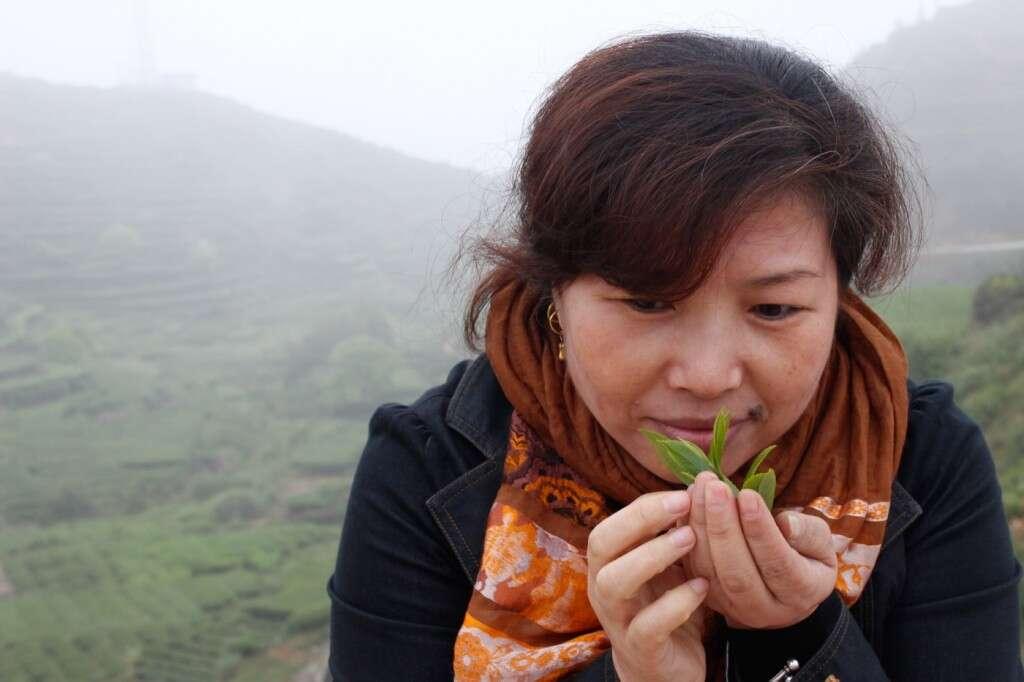 Wang Huimin, amazed by beautiful Tieguanyin tea leaves