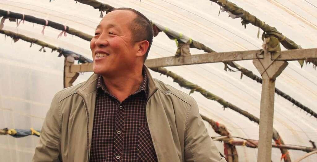 Mr. He in his tea fields