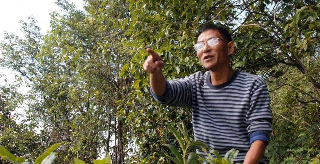 Mr. Zhou is one of the founding members of the Zhenyuan Dongsa Farmers Cooperative, and oversees picking, production and pressing