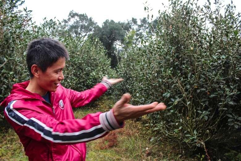 Mr. Li in the family's Old Tree Shui Xian grove