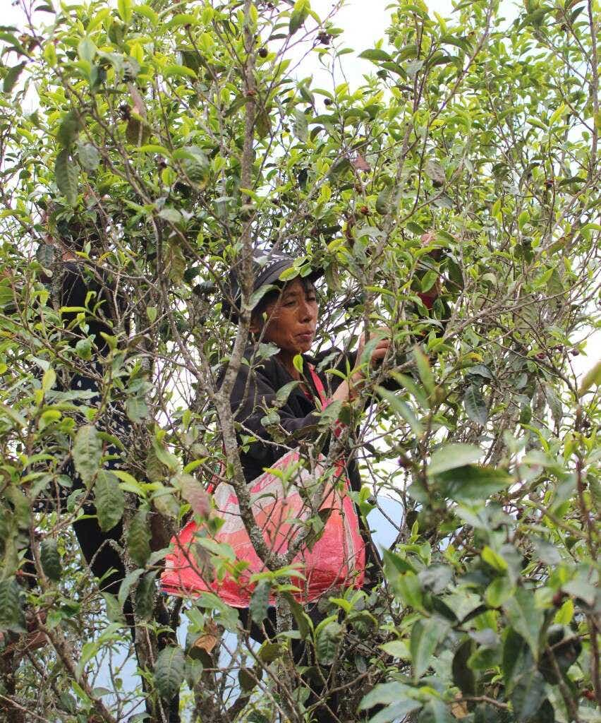 IMG_3677_qianjiazhai_climbtrees_largex2
