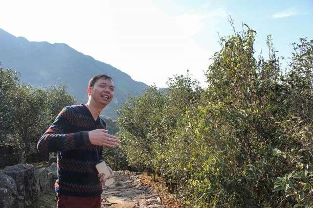 fenghuang-tea-field-9094_large