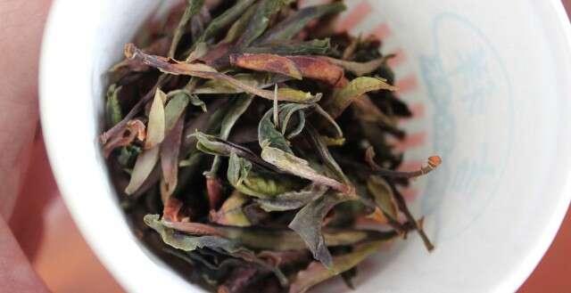 IMG_3487_qianjiazhai-wild-type-yabao-crassicolumna-new-dry-leaves
