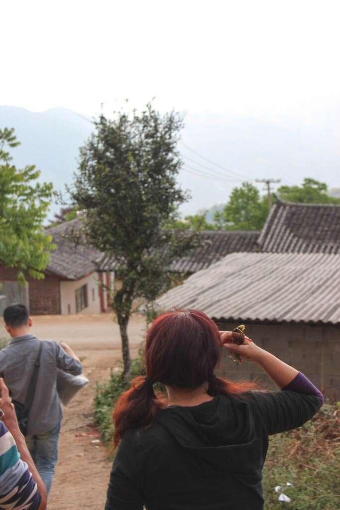 lao-caohong-SFJ-qianjiazhai-2485_teatree_notpicked