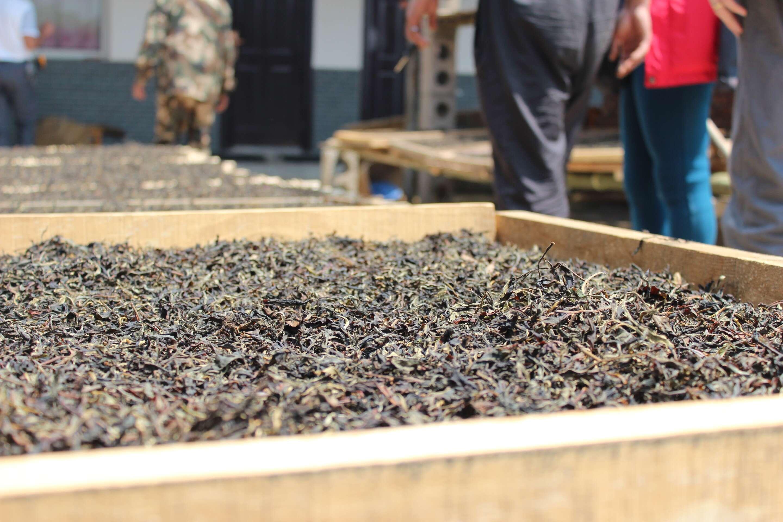 sun drying black tea in the courtyard
