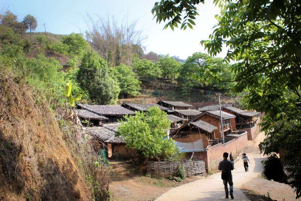 Homes outside Wenchacun spread out around an 1800 year old tea tree.