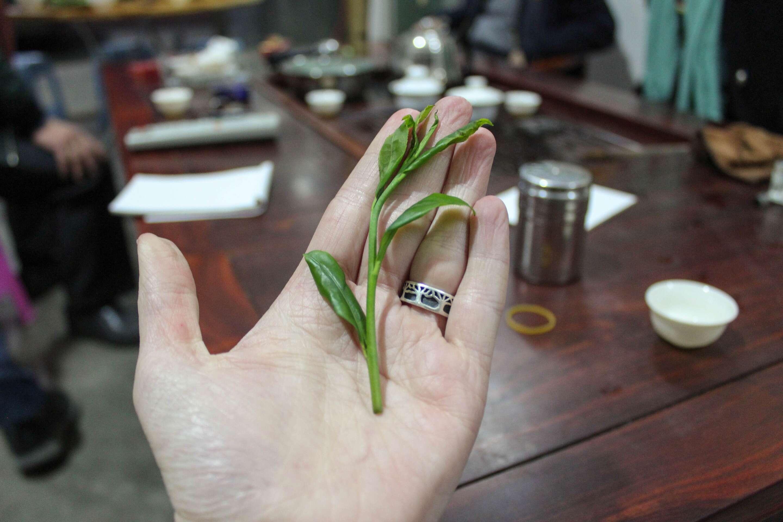 fenghuang-tasting-9459