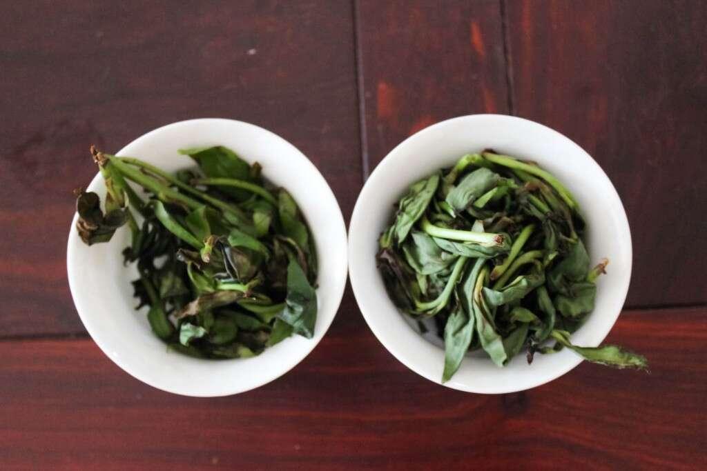 fenghuang-tasting-9766