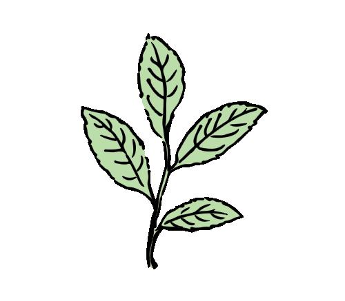 leaf-gfx-545