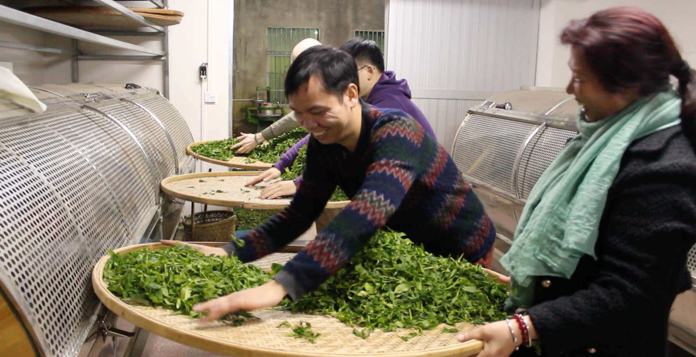 Wei Ming teaches Wang Huimin how to work with tea leaves at his brother's workshop in Wudongshan