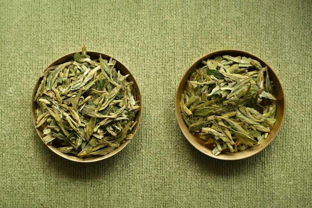 on the left, Longjing Qunti; on the right, Longjing #43