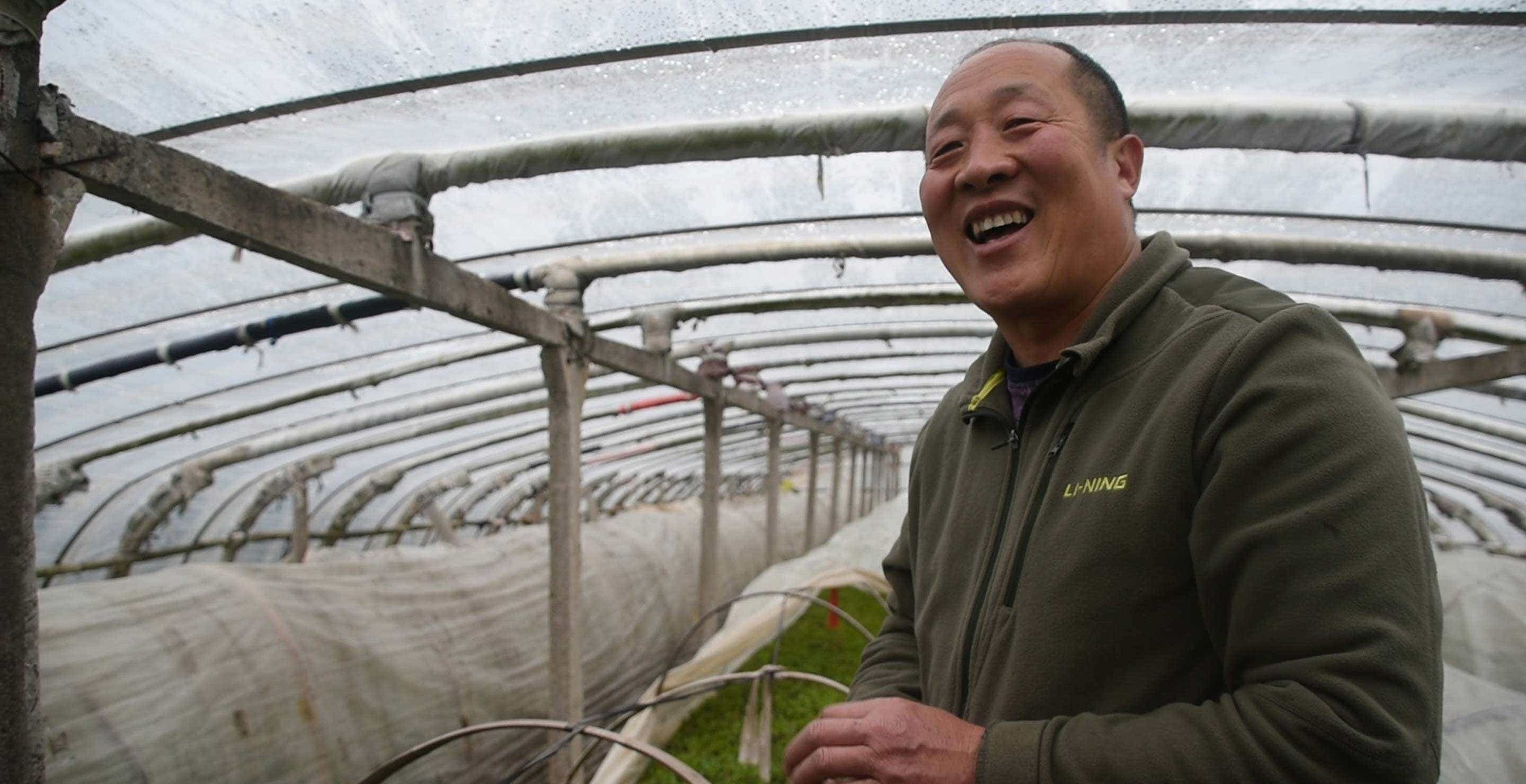 Protective greenhouse covers protect Mr. He's tea fields in early spring
