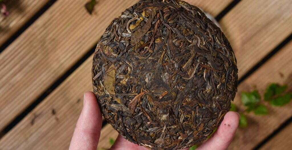 a cake of tea pressed from leaves picked from the tree at 24°16'13.6