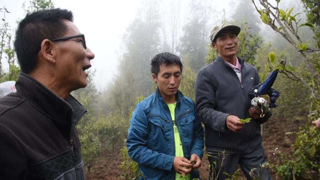 Mr. Li and his son with Mr. Zhou in their groves of culitvated Crassicolumna