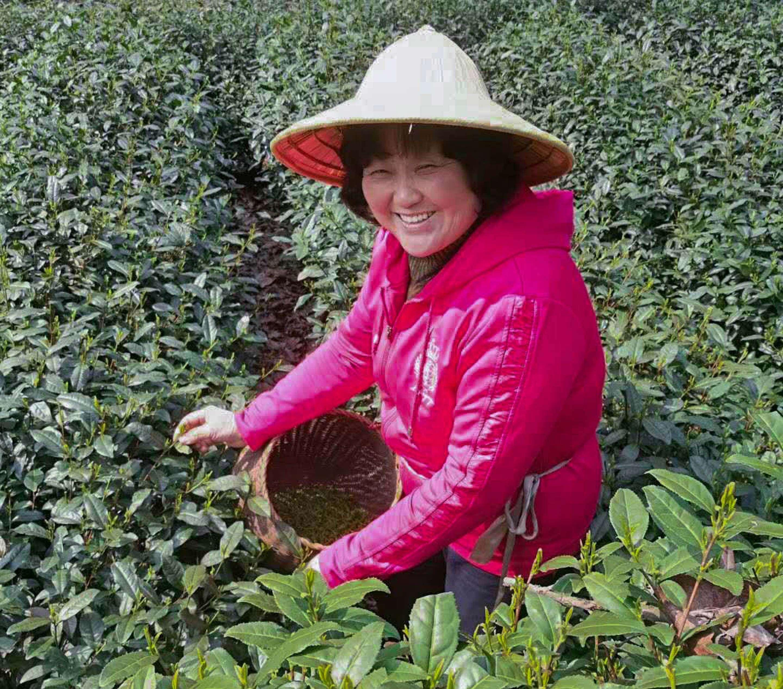 Li Xiaoping picks tea in early April