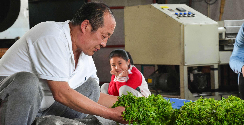 He Changke works with fresh tea leaves