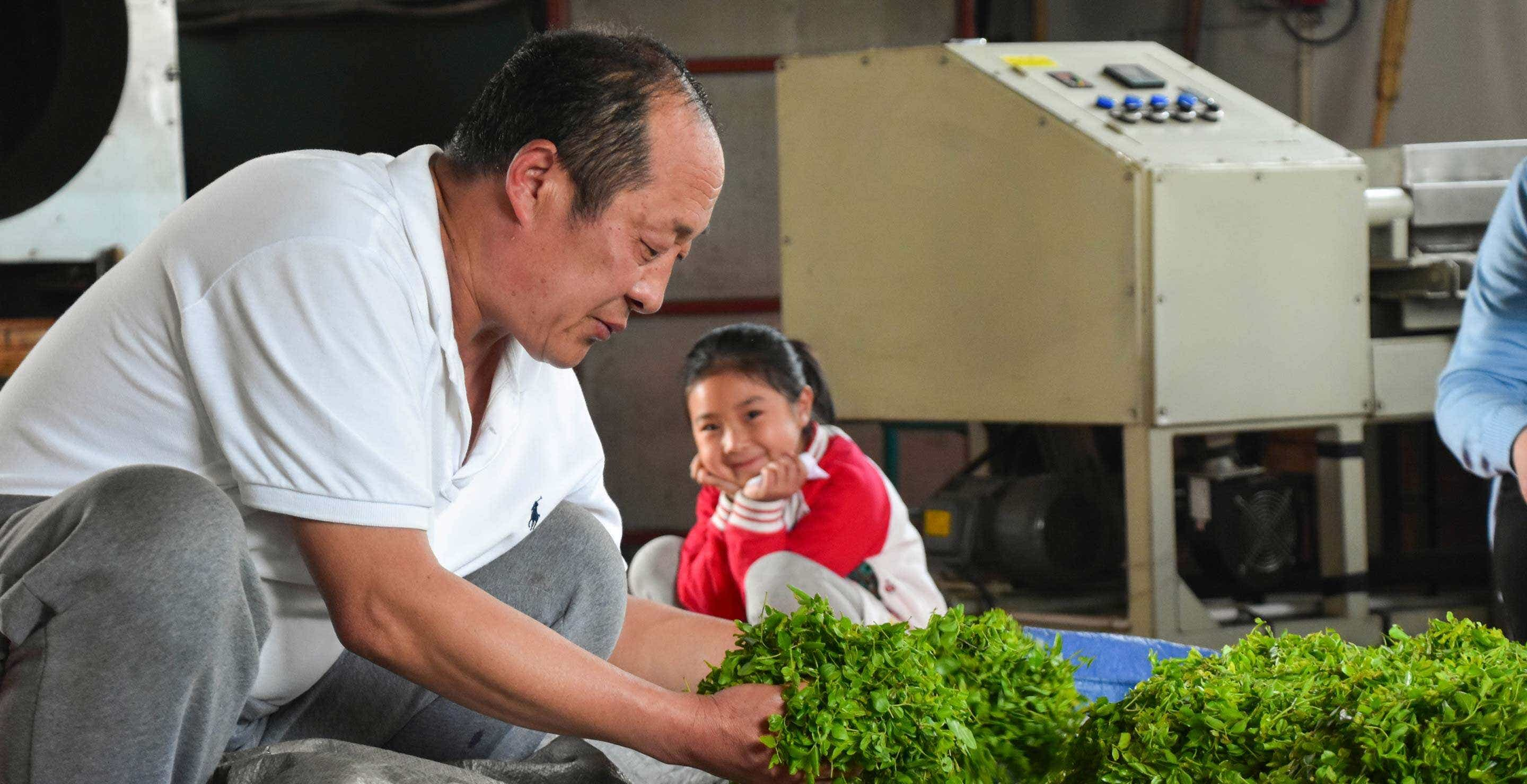 Liu Jiaqi watches as her grandfather works with fresh leaves in the He Family's workshop.