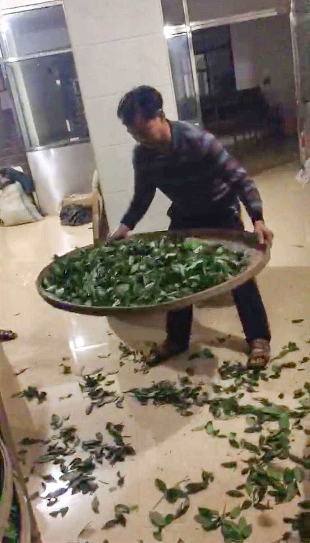 Zhang Rongde works with fresh tea leaves late into the morning