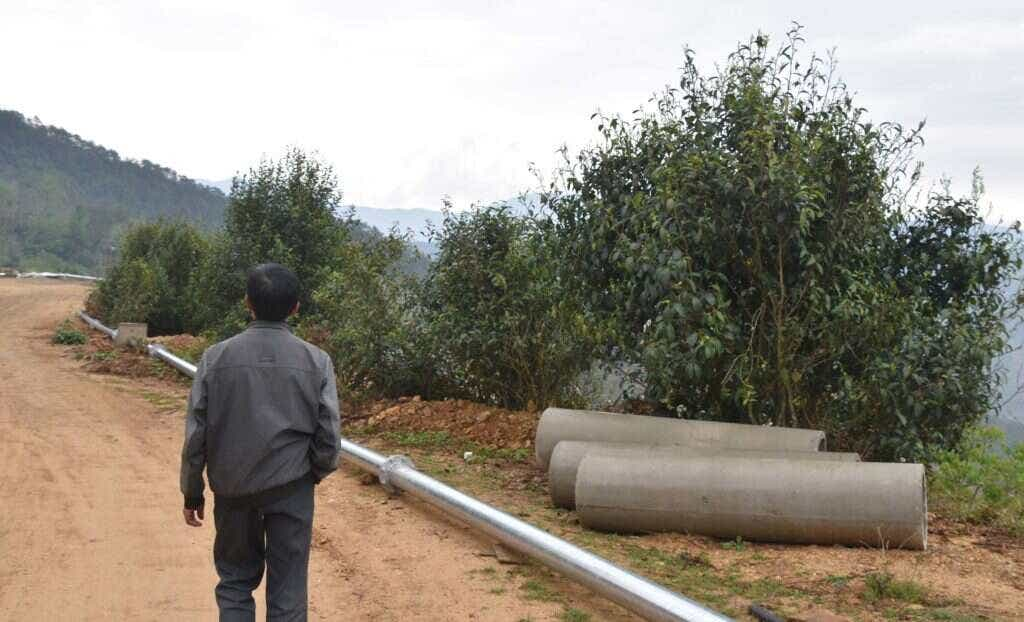 large native tea trees grow wild along the side of a new road project