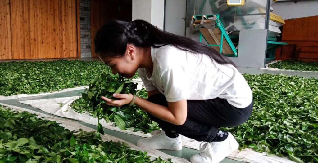 Li Xiangxi with her fresh picked tea leaves