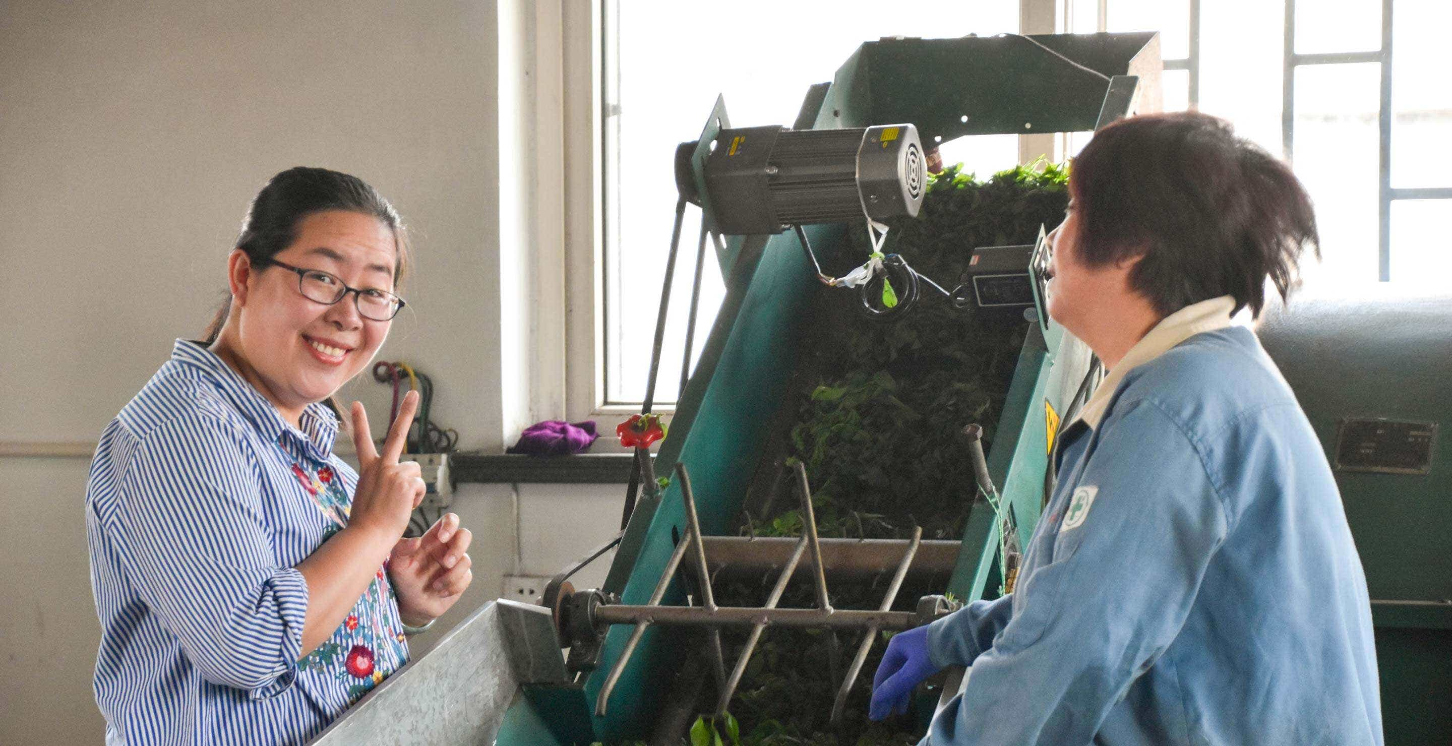 "He Qingqing and her mother help ""sha qing"" fresh tea leaves"