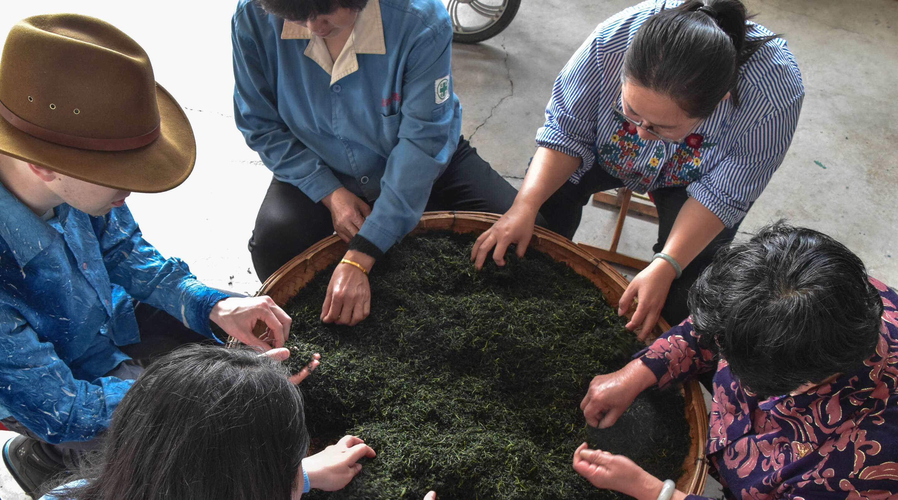 everyone works together to sort tea leaves