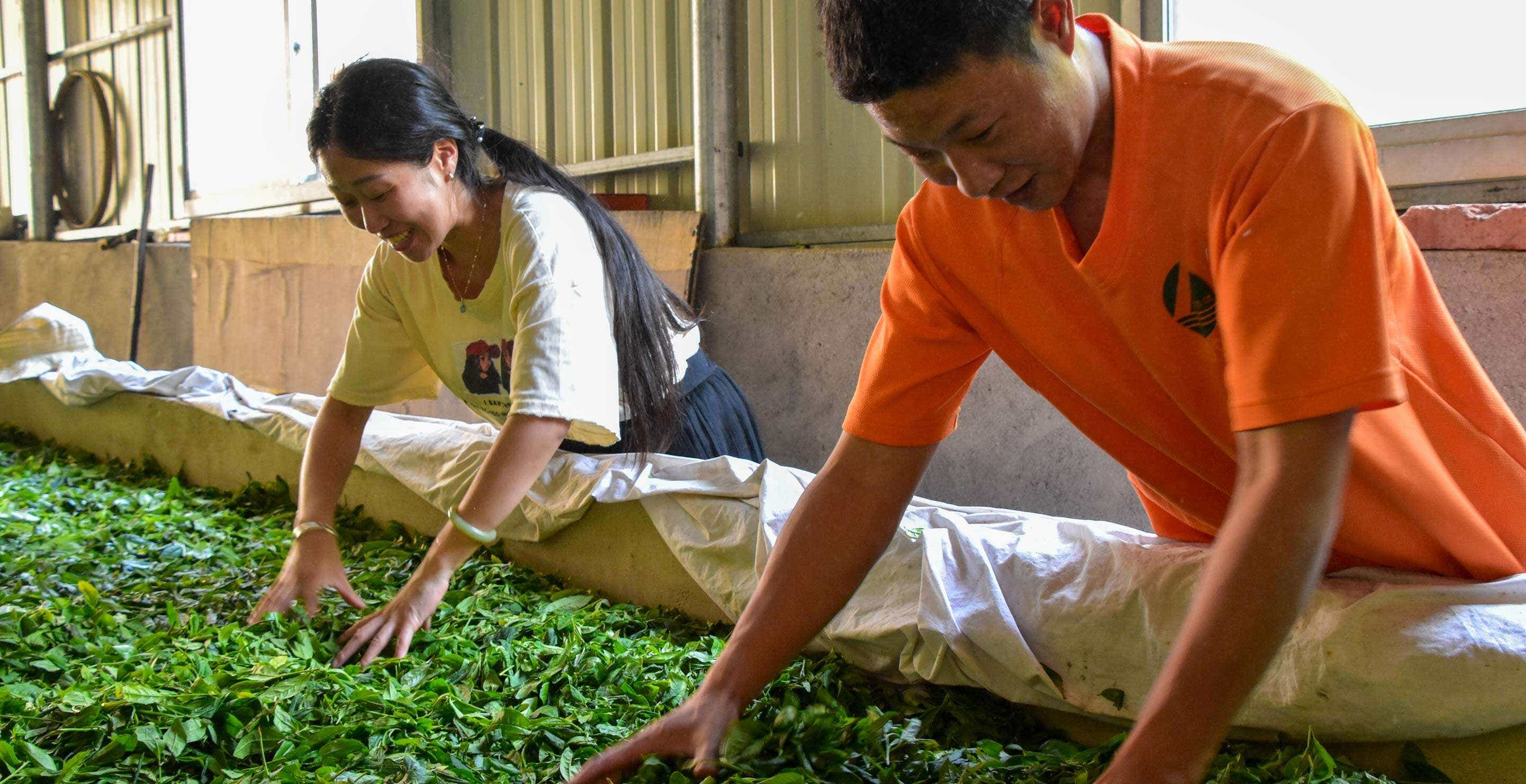 Li Xiangxi and her cousin work with wild foraged leaves at the family home in Tongmu