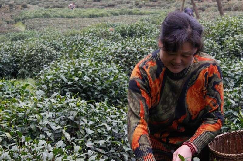 Longjing Tea Mrs Li-7583
